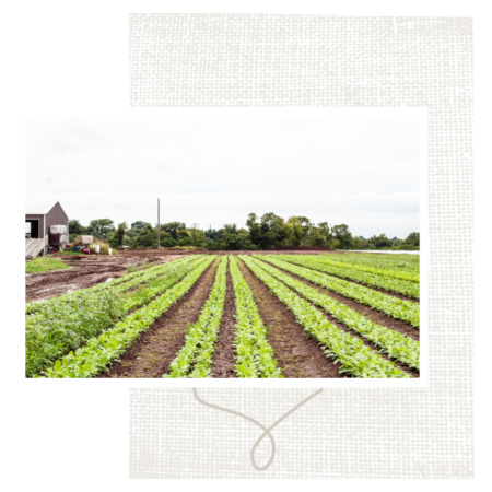 farms and sourcing 1