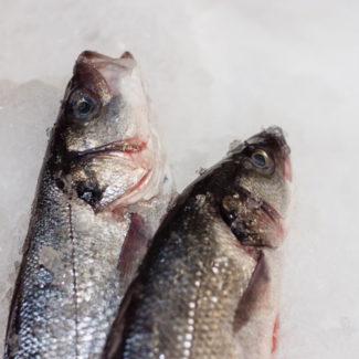Austin-Seafood-9105-crop_small